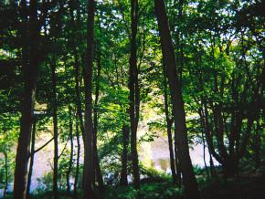 16x12-Green-Trees