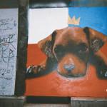 16x12-Puppy